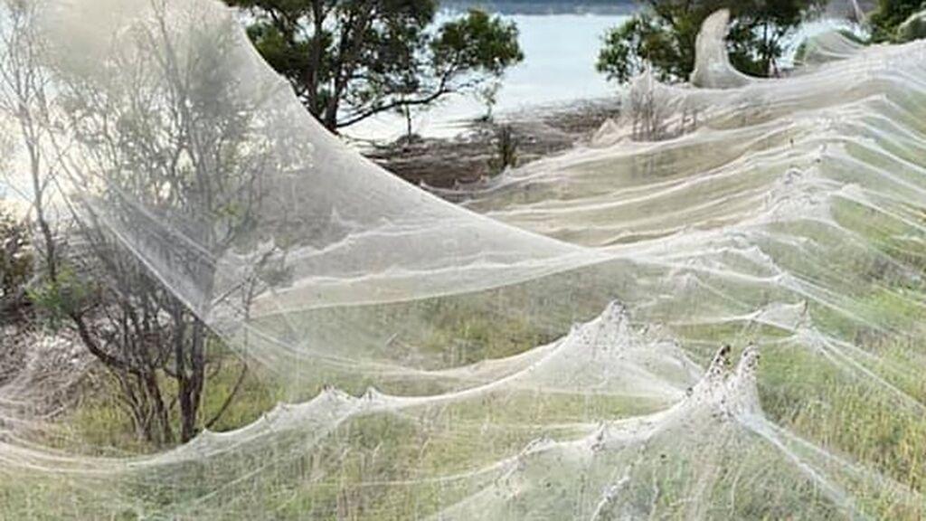 De película de terror: un pueblo australiano se cubre literalmente de telas de araña