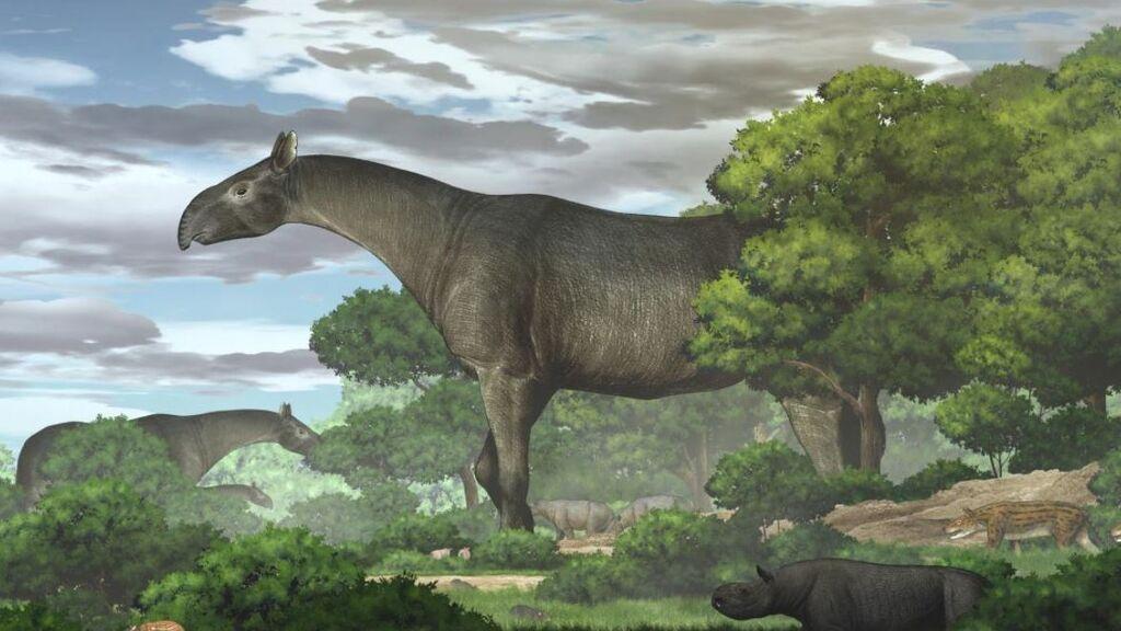 Hallan fósiles de un antepasado gigante del rinoceronte: pesaba el equivalente a cinco elefantes juntos