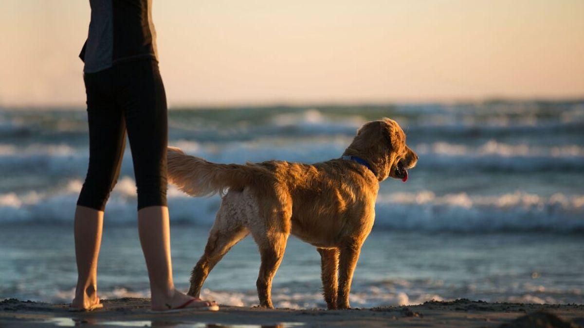 Playas de España para visitar con tus mascotas