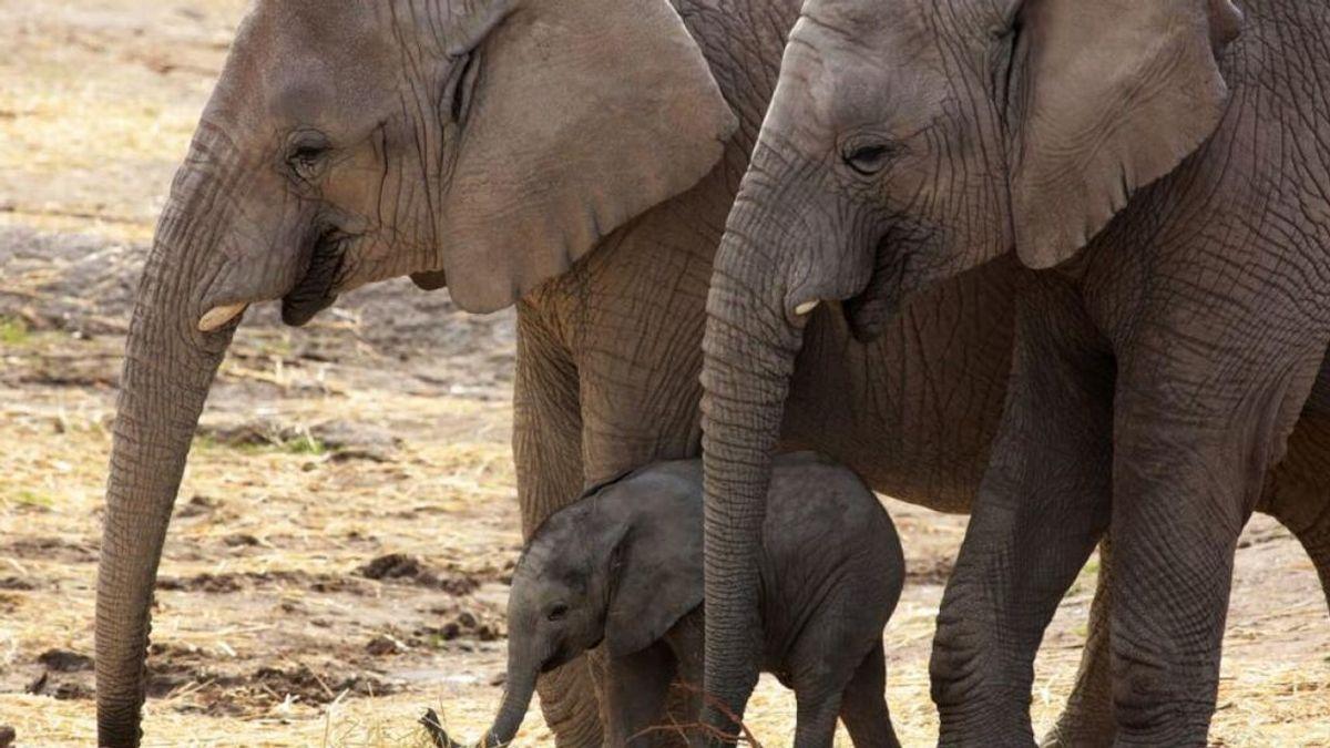 El hallazgo de crudo amenaza a decenas de miles de elefantes en Namibia y Botsuana