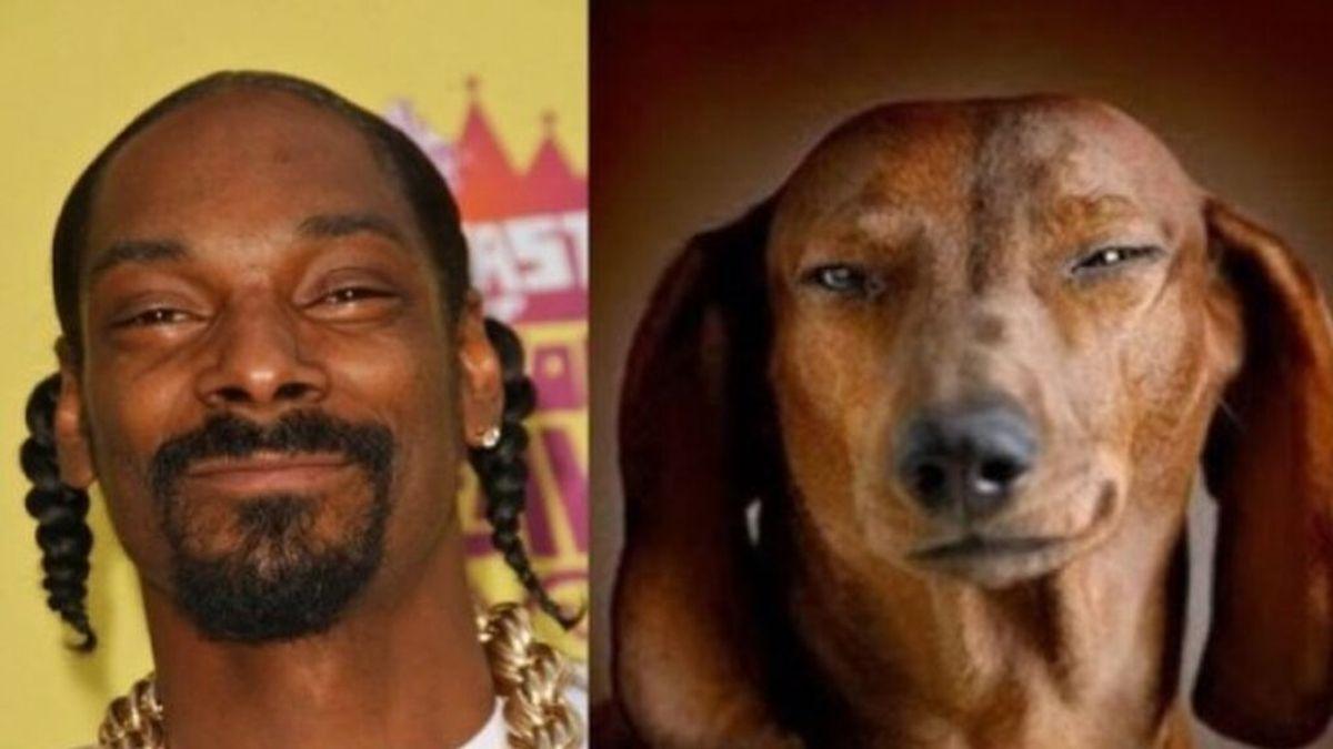 Superestrellas antropomórficas. Descubre qué famosos son idénticos a estos perros