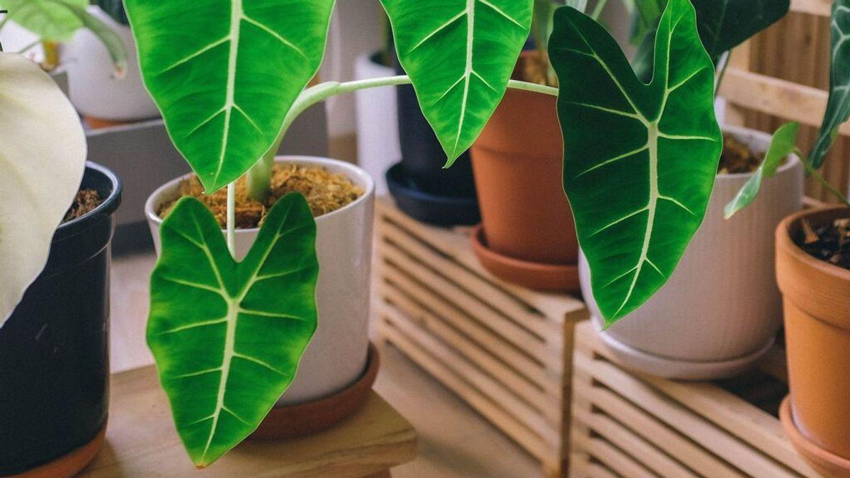 Cómo cuidar una planta en verano: riego y cuidados básicos