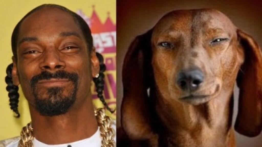 snoop-dogg-perro-igual