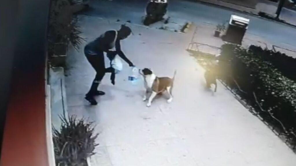 El asombroso vídeo en el que Fátima salva la vida de un bebé ante el ataque de un perro