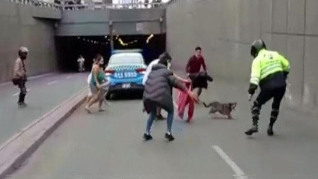 La loca carrera de Muchi por las calles de Lima
