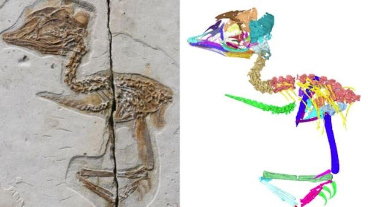 Unique Tyrannosaurus rex skull found in bird fossil