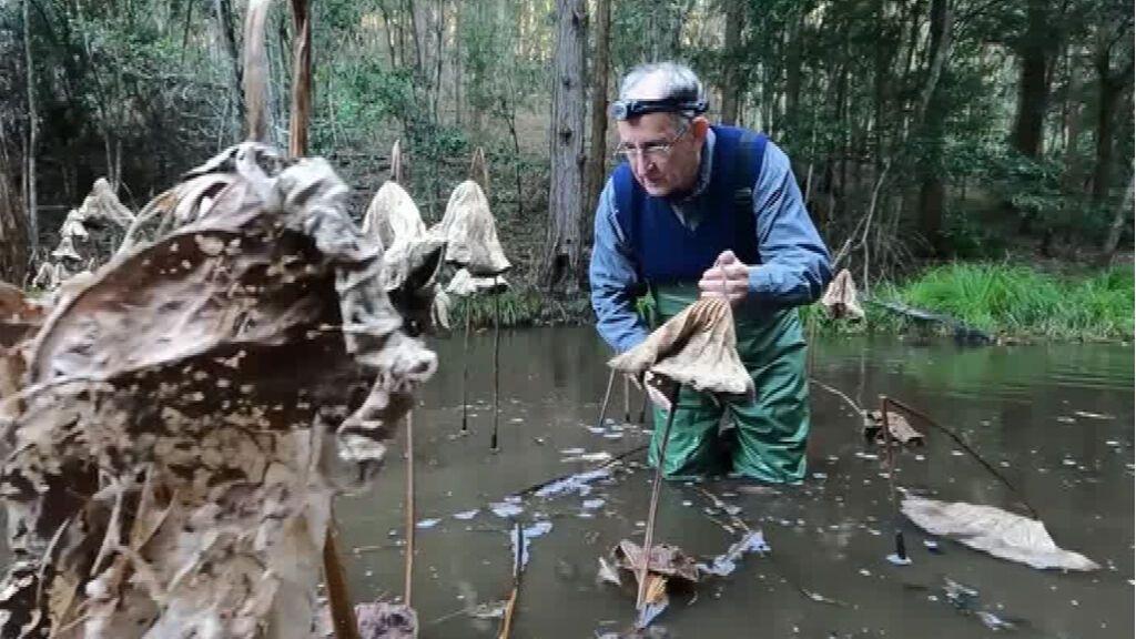 Mahony, el hombre que susurra a las ranas para entenderlas y protegerlas como nadie