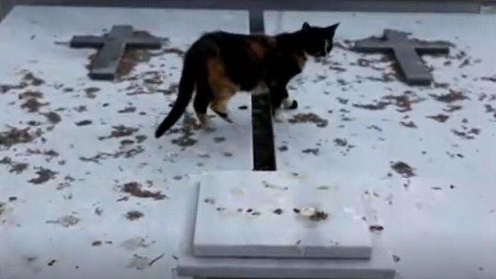 La superpoblación de gatos callejeros pone en jaque a Chipre