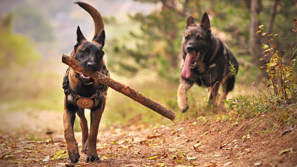 DOGS-STICK-PEXELS