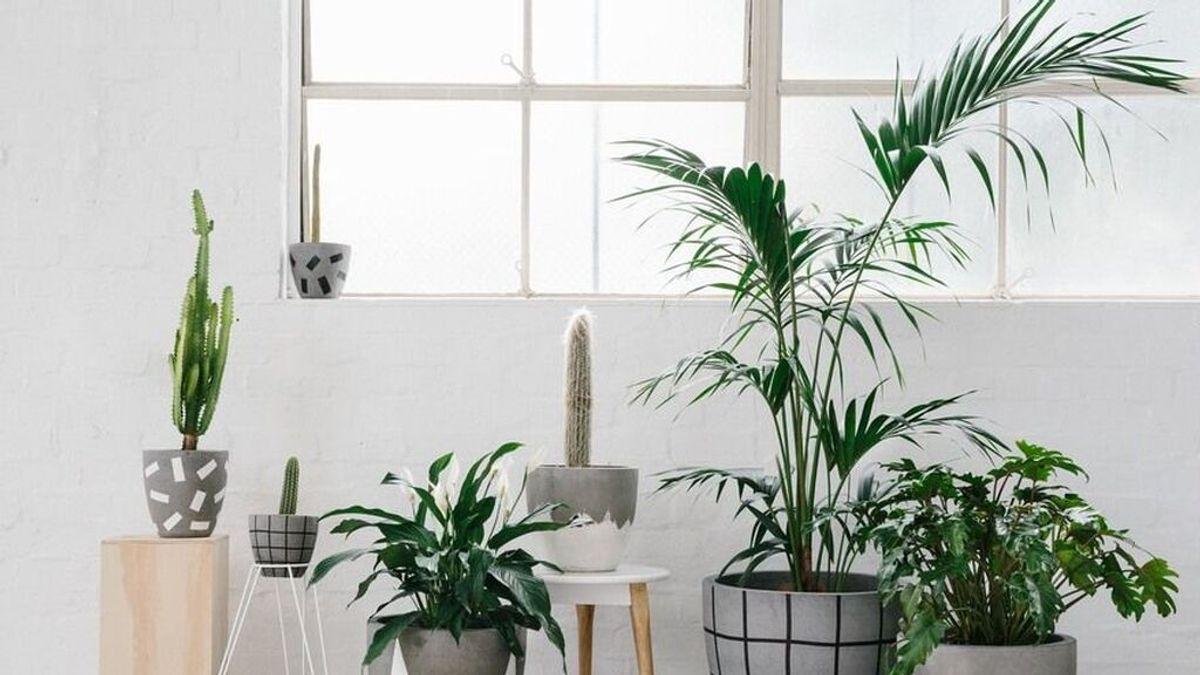 Cómo revivir una planta casi seca en pocos pasos: los x tips que deberás seguir para devolverla a la vida.