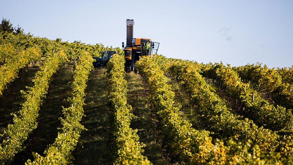 Los aranceles chinos se ceban con el vino australiano
