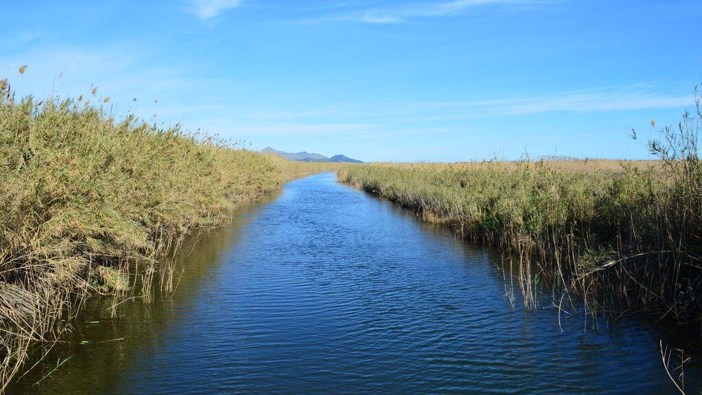 Canal del Parc Natural de s'Albufera de Mallorca