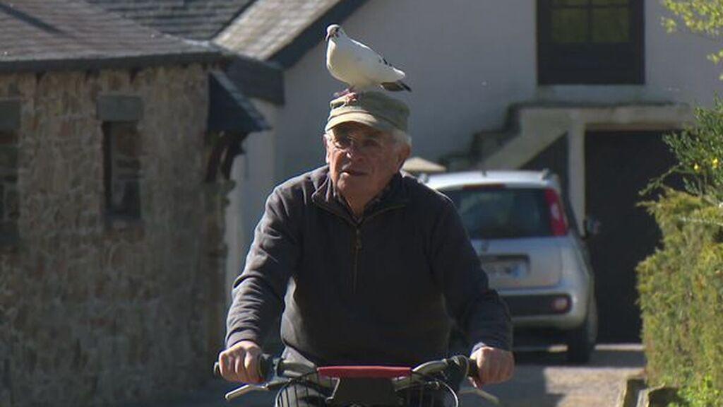 La salvó y ahora son inseparables: la entrañable amistad entre un jubilado y una paloma
