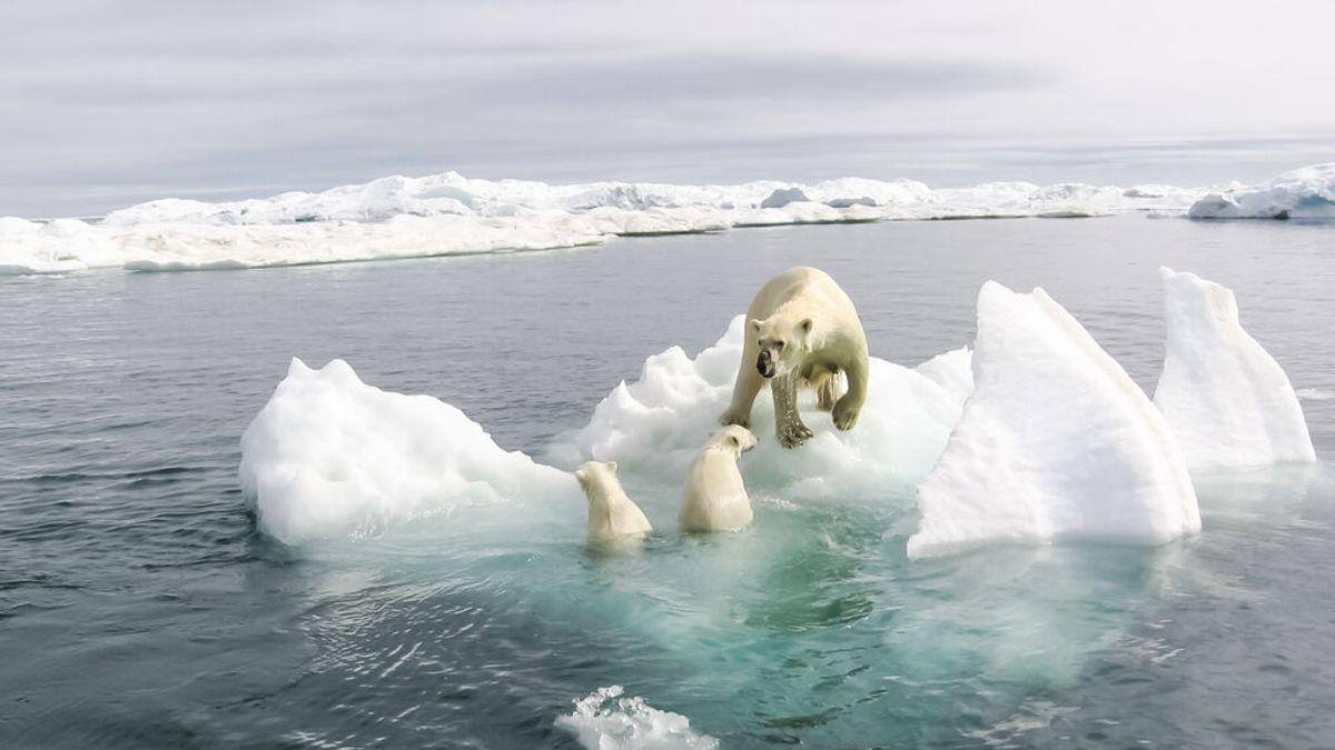 El último refugio de especies del Ártico empieza a sucumbir al calor del verano