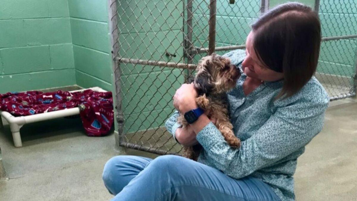 Sargento Pepper, el perro que logró reencontrarse con su dueña tras 7 años gracias al aviso de un refugio