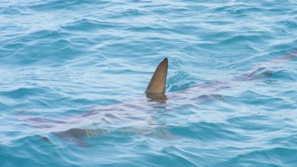 Ataque de tiburón a un niño en un playa de Florida:  Hospitalizado por la mordida en una pierna