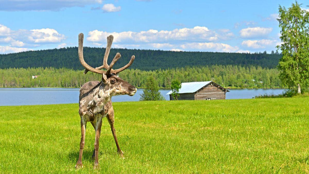 Día más caluroso en Laponia: se registran nuevos récords de temperatura en los países nórdicos