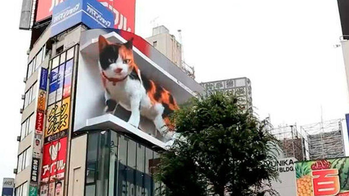 Un gato gigante en 3D vigila desde las alturas uno de los barrios más concurridos de Tokio