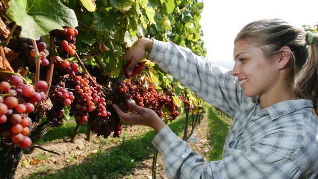 Alemania quiere un sector agroalimentario más sostenible