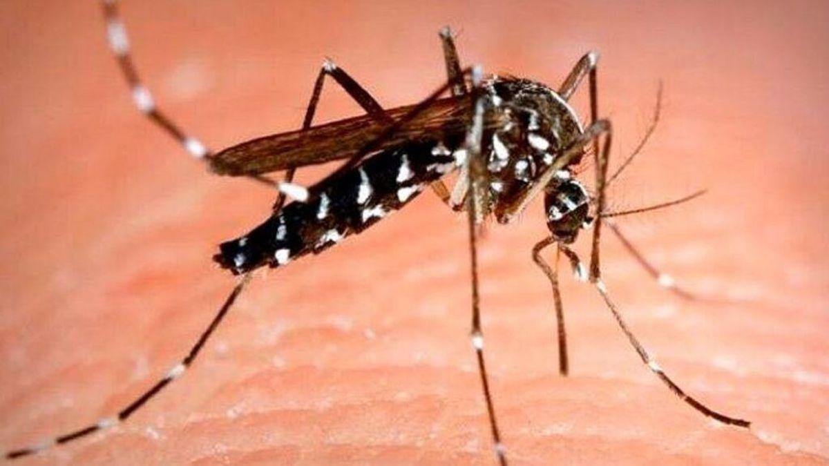 Alerta por el aumento del área de distribución de mosquitos vectores del dengue