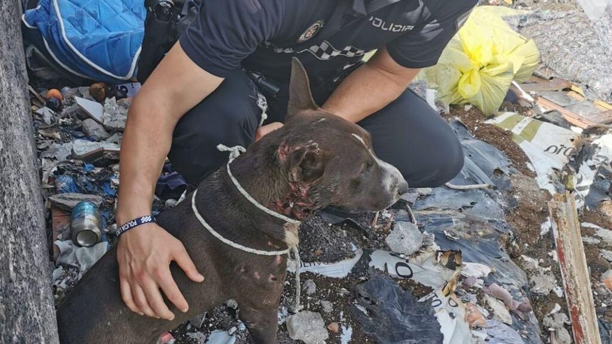 Tiran al fuego a un perro herido envuelto en una manta en Almería