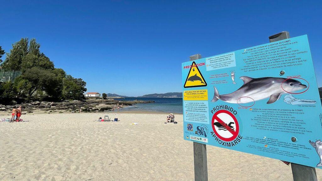 Advertencia a los bañistas de varias playas gallegas: prohibido tocar al delfín Manoliño