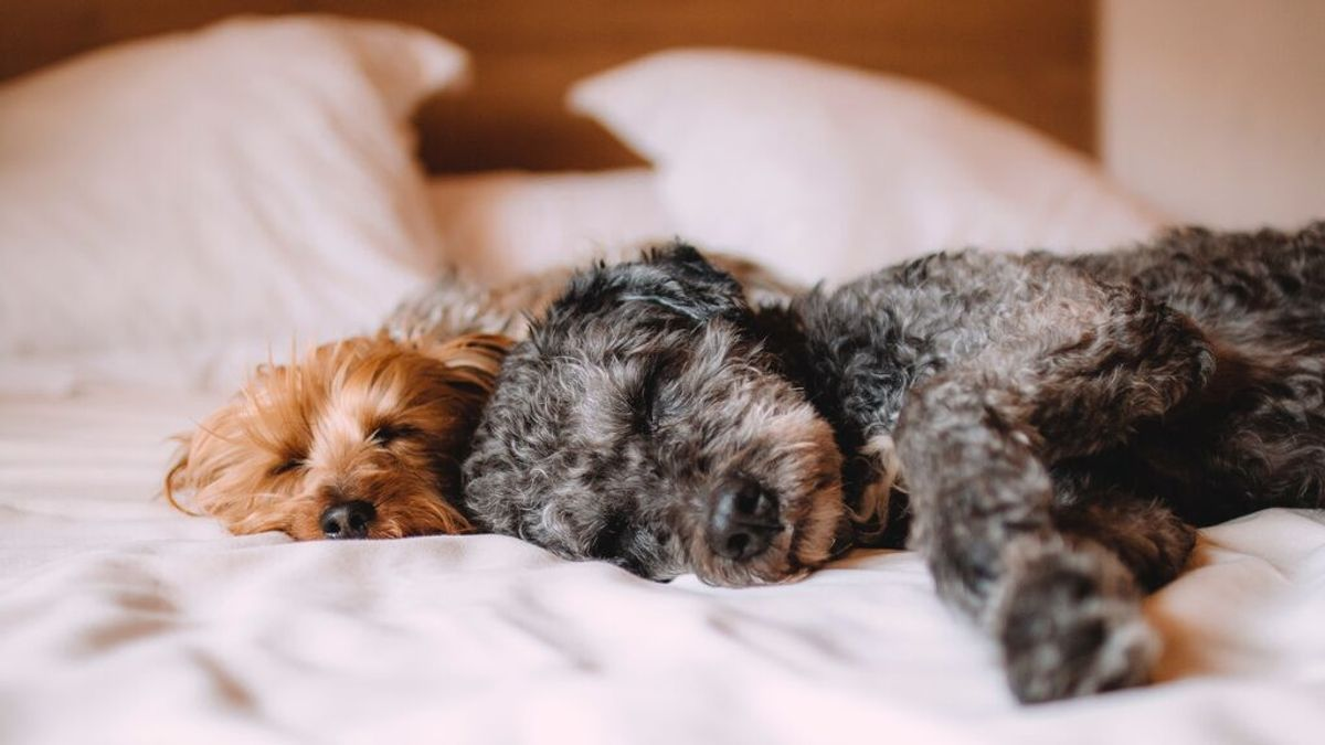 Hoteles caninos para dejar a tu mascota en buenas manos