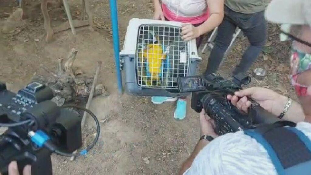 Logran que el guacamayo robado en Utrera baje del cable de alta tensión