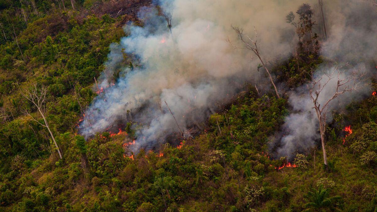 La selva del Amazonas contamina: emite más dióxido de carbono del que absorbe