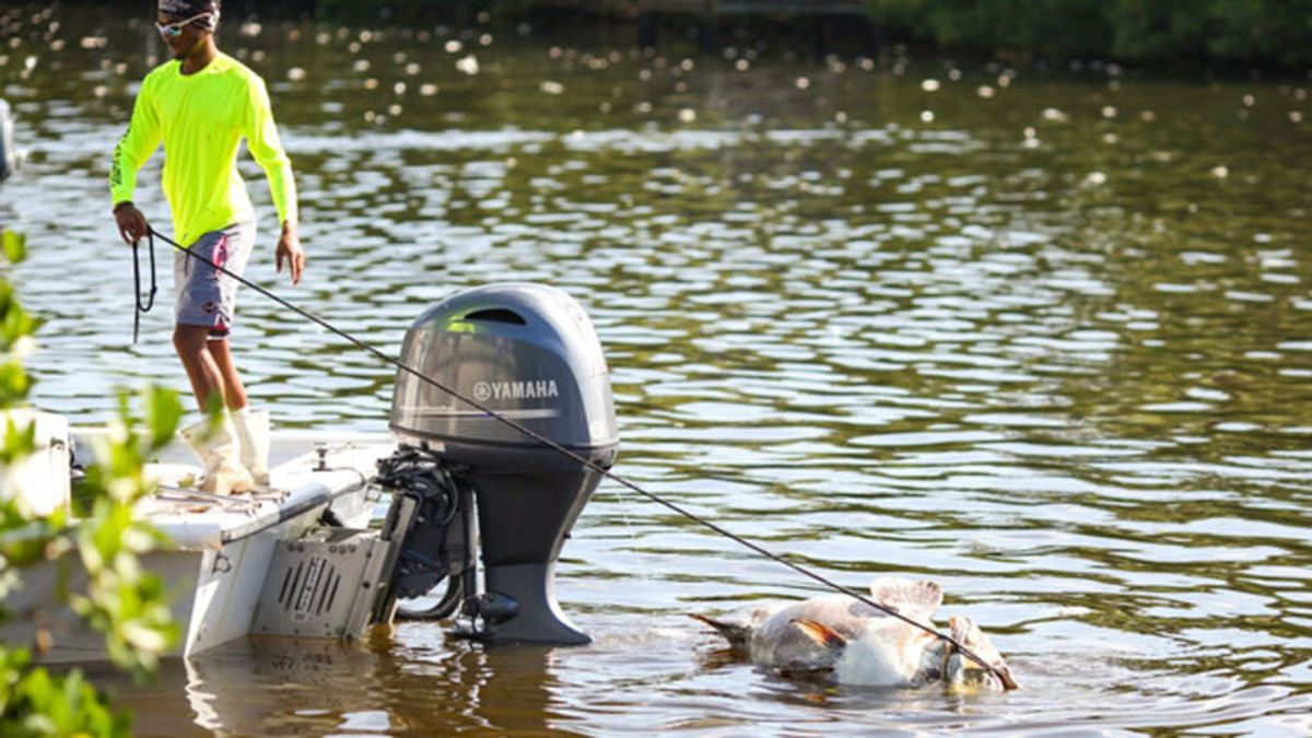Delfines y mantarrayas han muerto en la costa de Florida por una extraña 'marea roja'