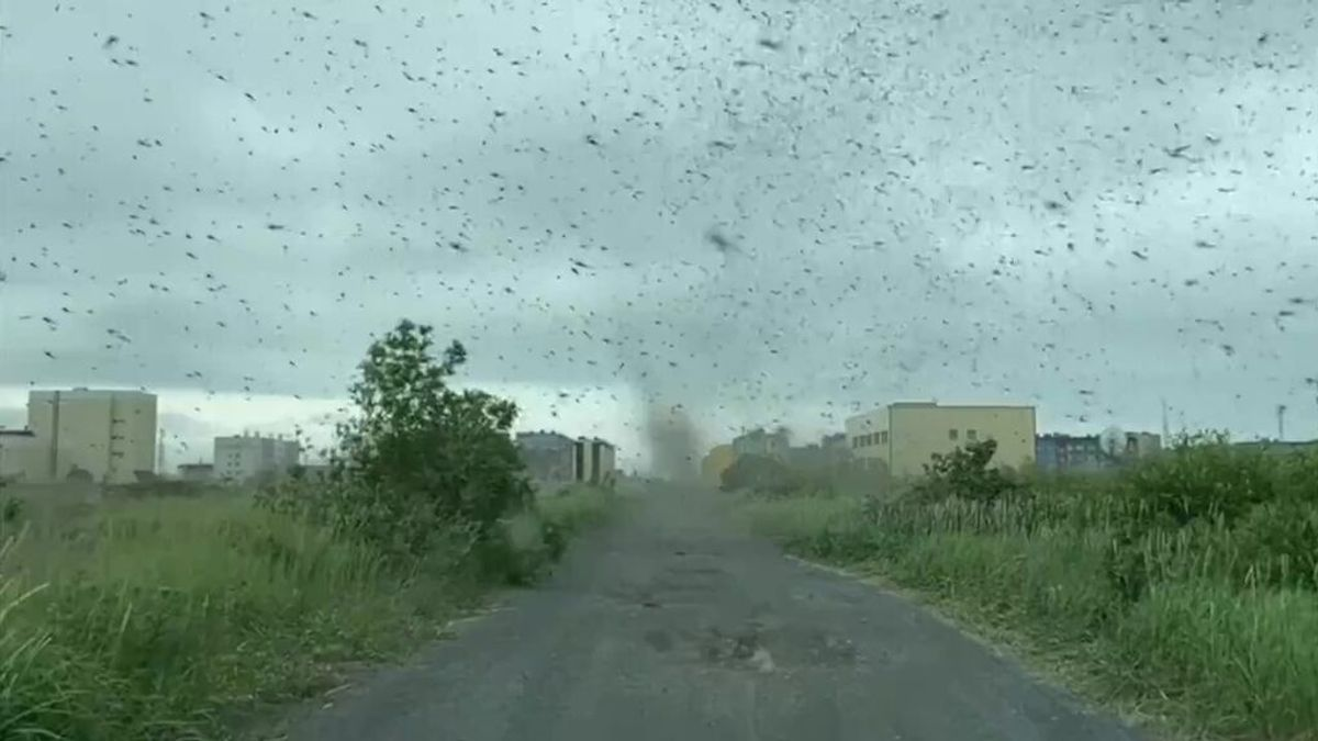Un 'tornado' de mosquitos invade el Lejano Oriente ruso