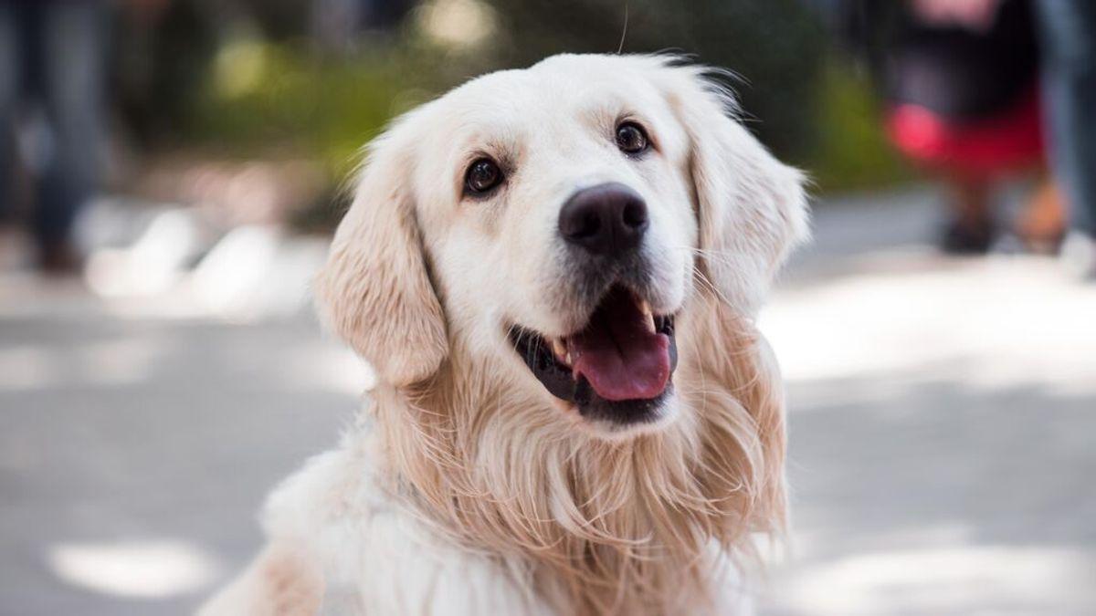 Día Mundial del Perro: qué puedes hacer para celebrarlo