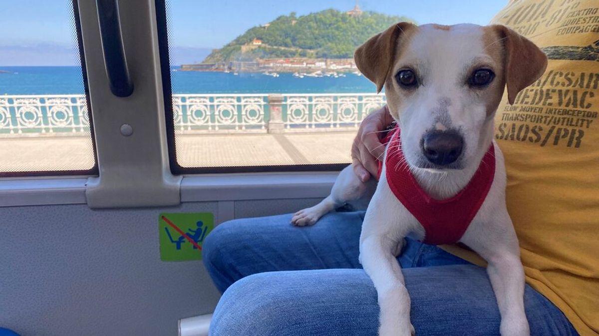 San Sebastián e Irún, entre las siete ciudades españolas donde el perro viaja en autobús sin trasportín