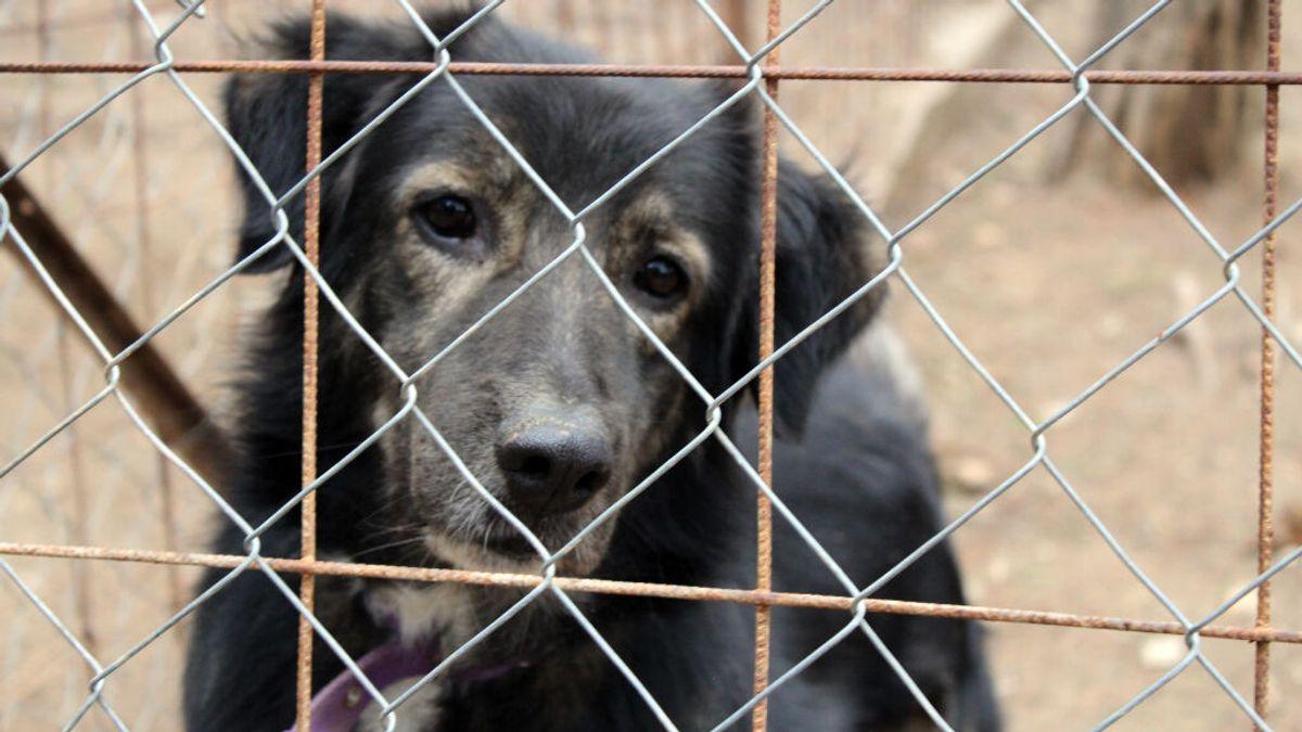 ¿Más abandonos o más adopciones tras el coronavirus_ ¿Cómo suele deshacerse la gente de sus mascotas