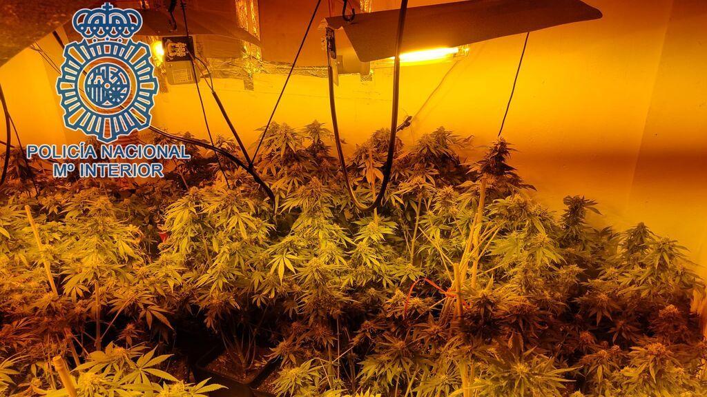 Siete detenidos en Sevilla por echar a los vecinos de sus casas para cultivar marihuana