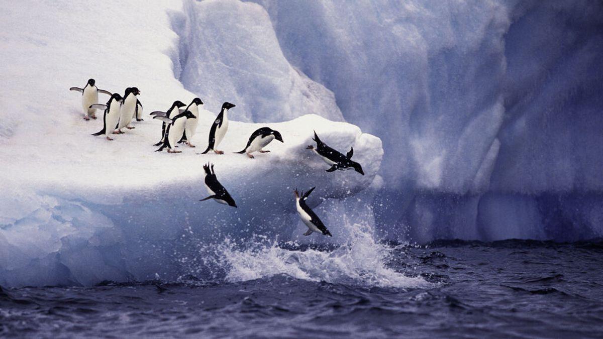 Los microplásticos llegan a la Antártida: hallan poliéster en la dieta de los pingüinos