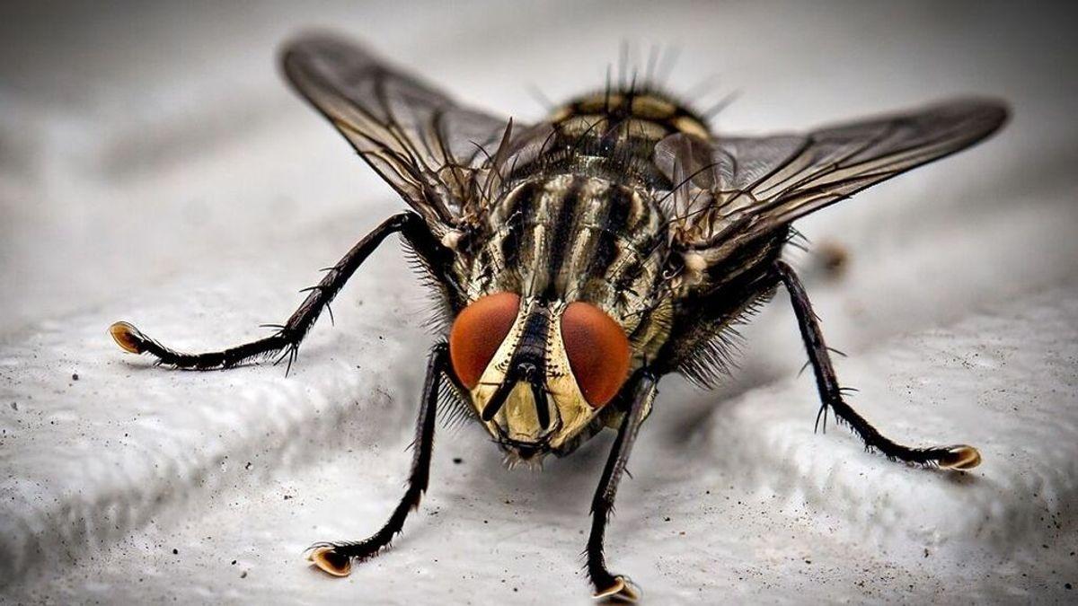 Desde pistolas de sal a ultrasonidos, 10 formas de acabar con moscas y mosquitos