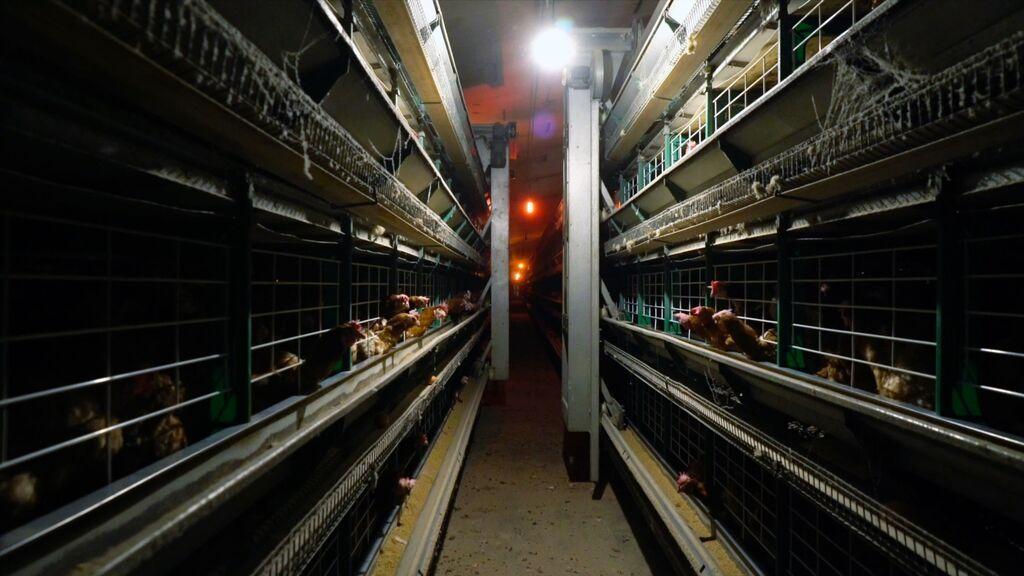 Unidas Podemos exige no autorizar nuevas granjas de ganadería intensiva y endurecer la normativa ambiental