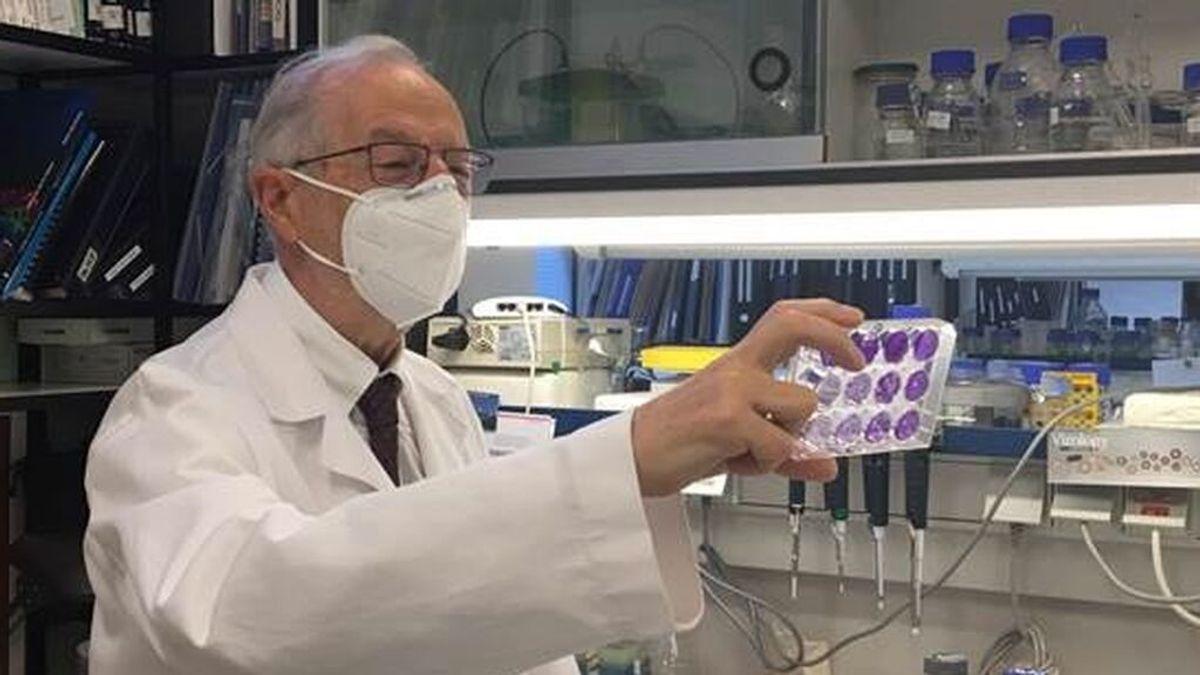 Más estudios apuntan a que la vacuna intranasal, como la española de Enjuanes, serán más eficaces