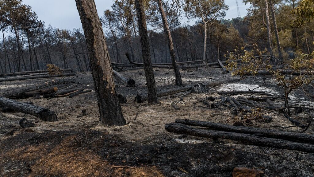 Estabilizado el incendio de Santa Coloma de Queralt con 1.7000 hectáreas quemadas