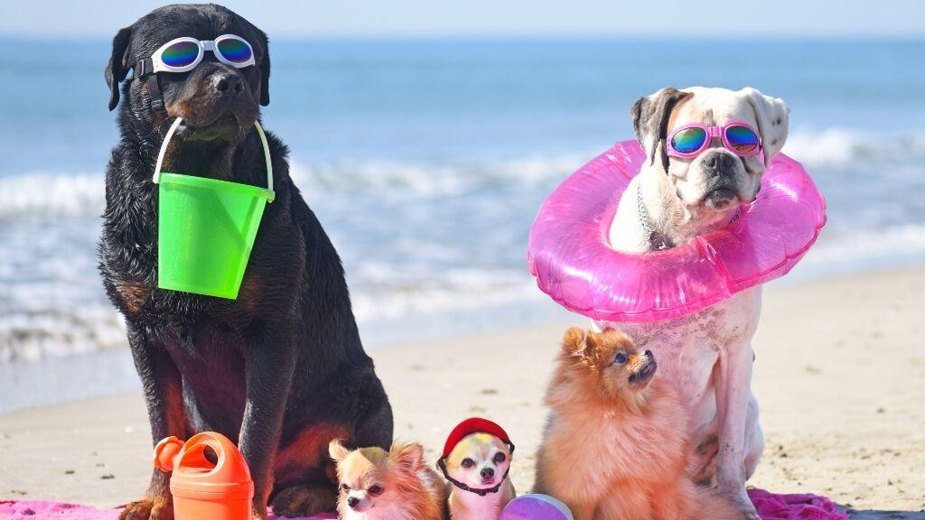 Playas Petfriendly para viajar este verano