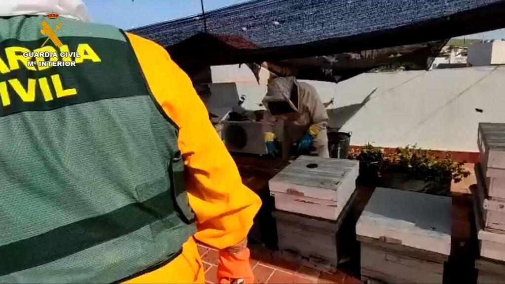 La Guardia Civil desmantela una granja apícola en la azotea de una vivienda en Camas