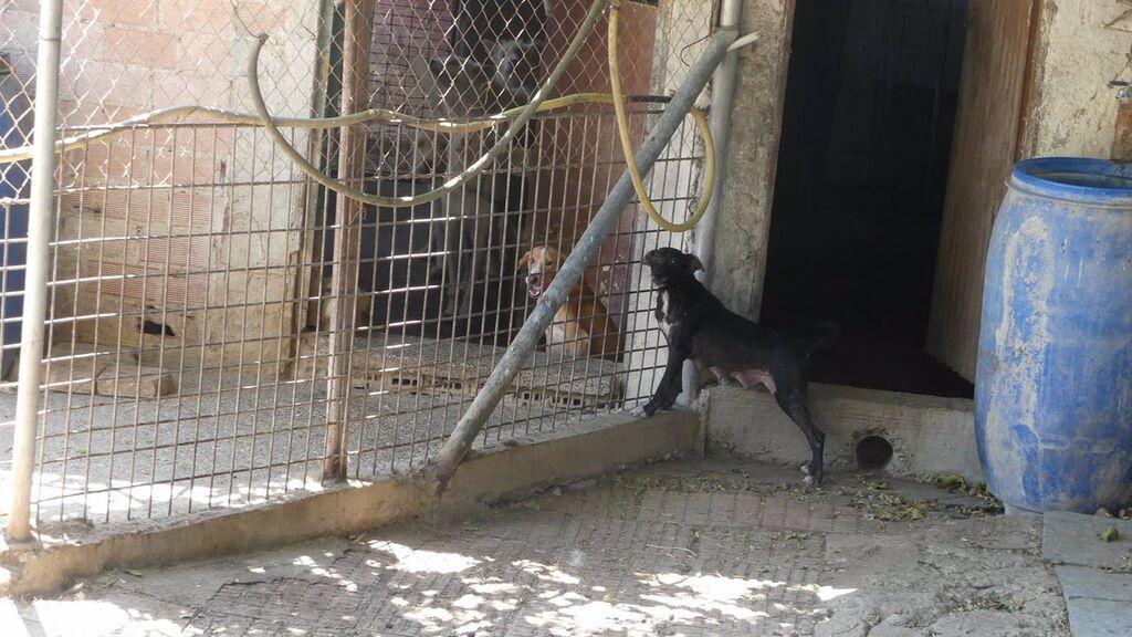 """Galgos del Sur advierte que 200 perros de caza """"malviven"""" en condiciones """"deplorables"""" en unas perreras en Córdoba"""