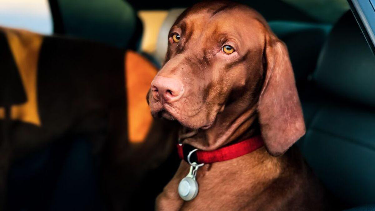 Cinco destinos para viajar con tu mascota