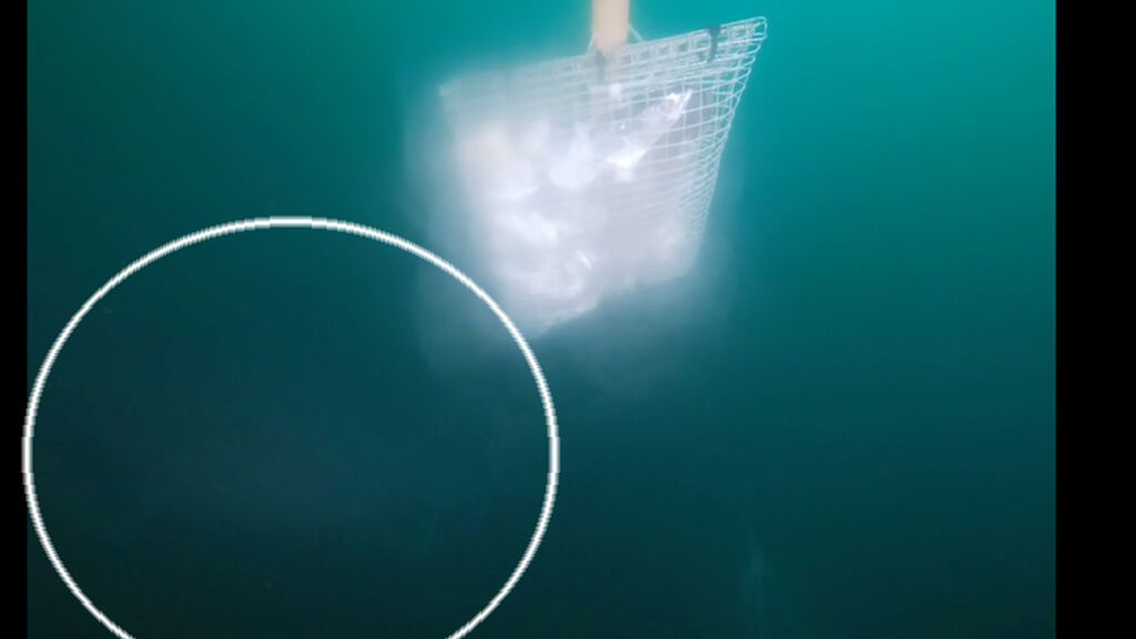 Investigadores graban a un tiburón gigante prehistórico frente a las costas de Clare, en Irlanda