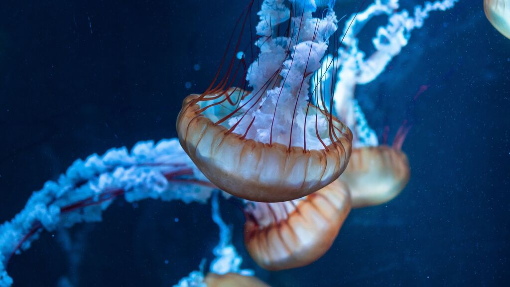 Medusapp, aliada perfecta para no encontrar medusas este verano