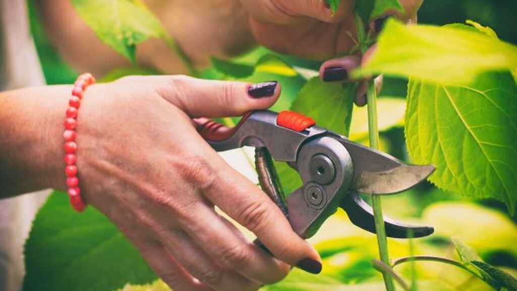 Será muy importante utilizar una tijera de poda adecuada al tipo de planta.