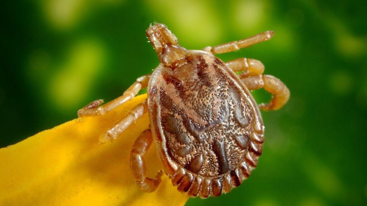 ¿Cómo evitamos que las garrapatas se nos enganchen y transmitan enfermedades?