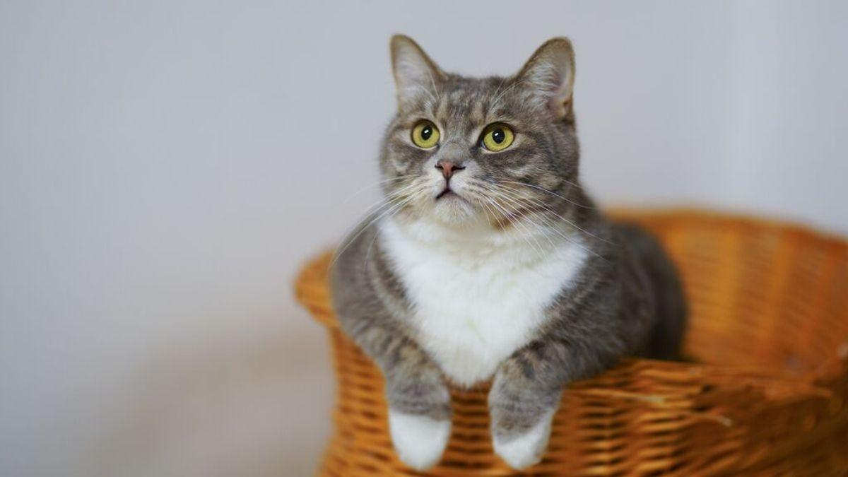 Día Internacional del Gato: consejos para cuidar de tu mascota