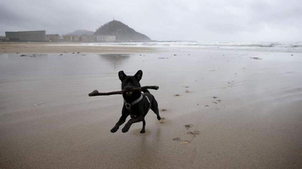 Perro en mar